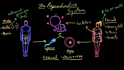 The ovarian cycle | Reproductive system introduction | Khan Academy