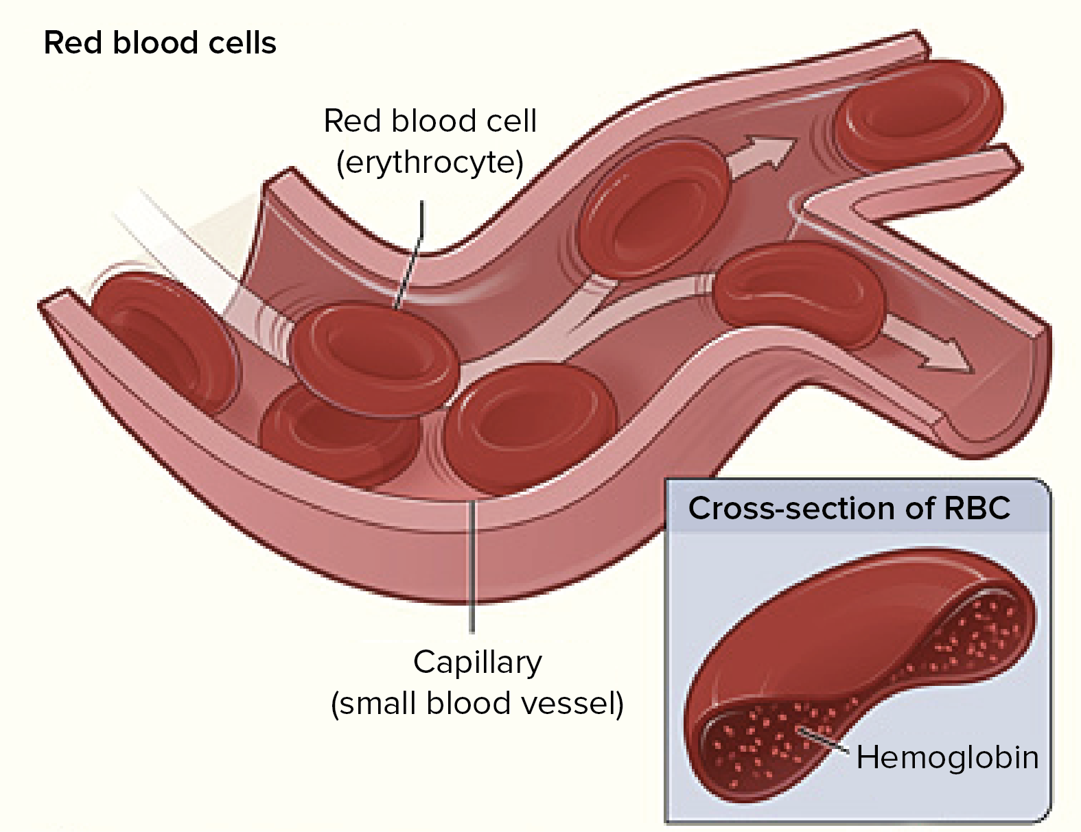 Red Blood Cells Video Human Biology Khan Academy