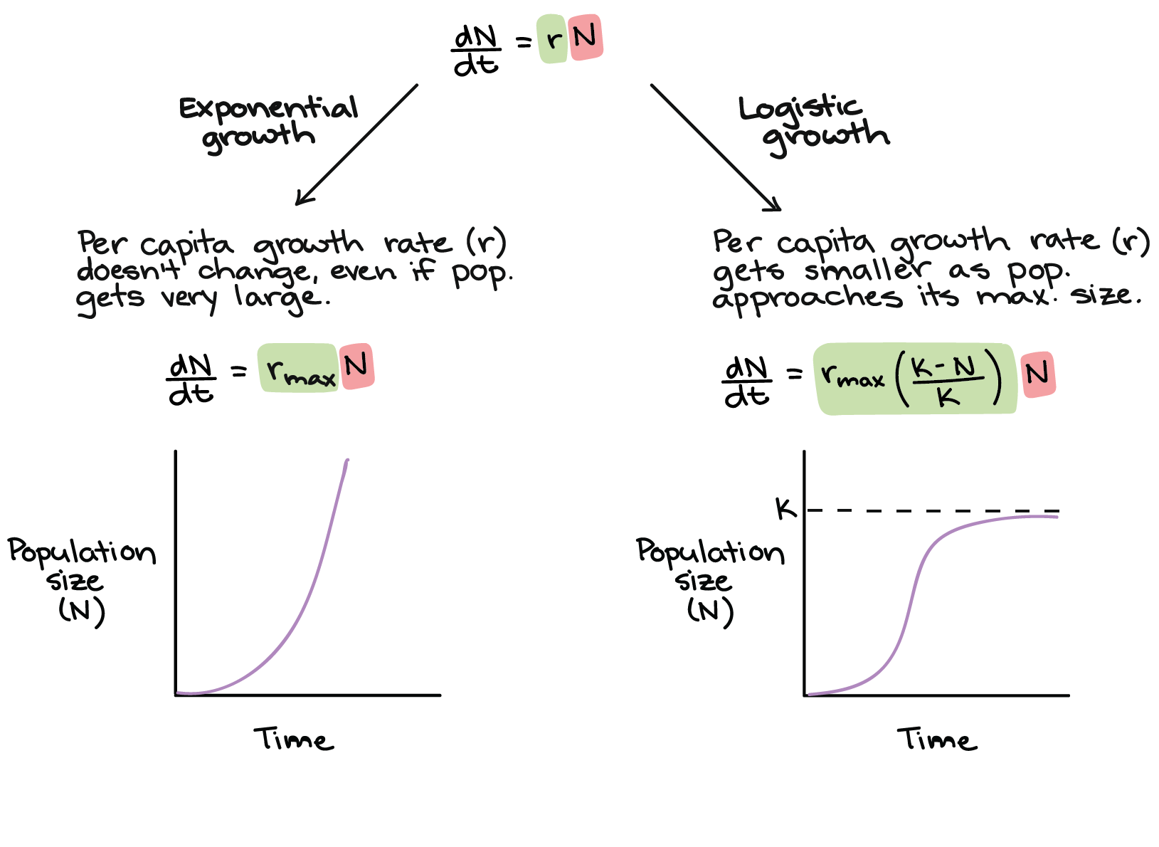 Exponential growth equations