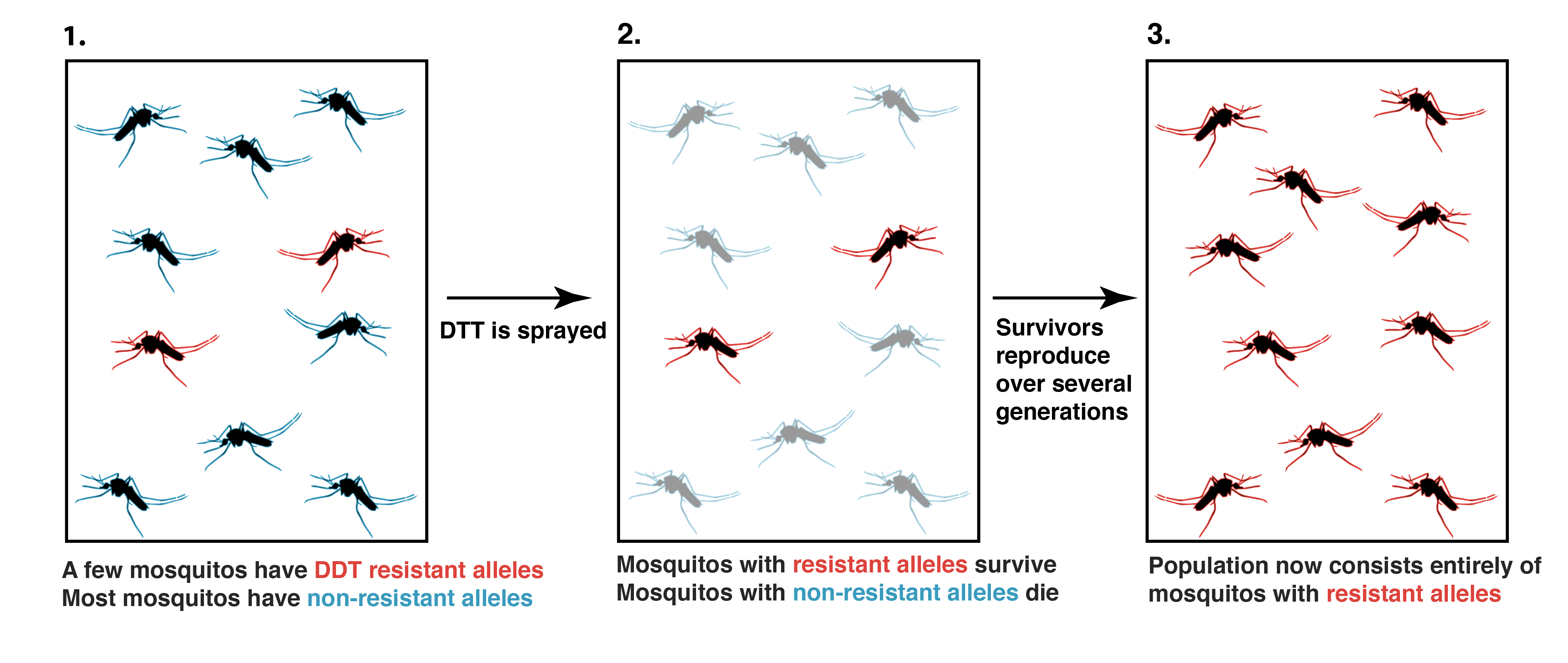 worksheet Natural Selection Worksheets evidence for evolution article khan academy the of ddt resistance in mosquito populations was observed directly 1950s as a result campaign to eradicate malaria